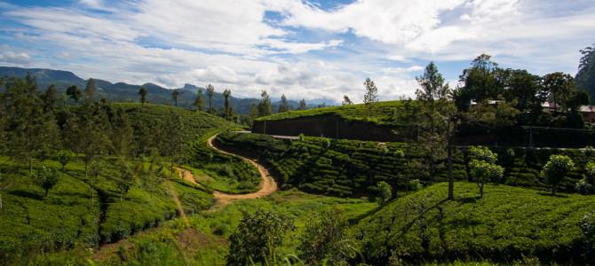 Sri Lanka: Das Hochland