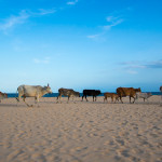 Sri Lanka: Die Ostküste